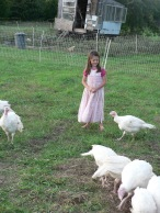 Our turkeys!